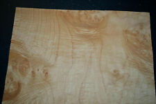 Maple Burl Raw Wood Veneer Sheet 15 X 18 Inches 142nd Thick I4681 25