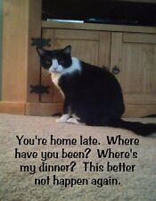 METAL REFRIGERATOR MAGNET You Home Late Not Happen Again Cat Family Friend Humor