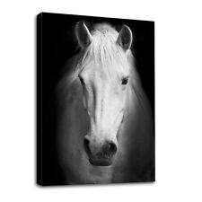 Modern Canvas Wall Art Print White Horse  Painting Home Decor Picture Unframed