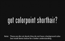 (2x) got colorpoint shorthair? Sticker Die Cut Decal