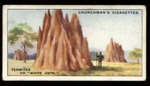 Tobacco Card, Churchman, NATURES ARCHITECTS, 1930, Termites, White Ants, #24