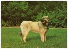 "Ak dogs, Postcard/""Sarplanina c"" - Yugoslav Shepherd Dog"