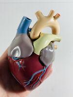 Vintage 1959 Mercks Plastic Anatomical Human heart Model NICE
