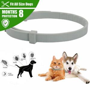 Regolabile Anti Pulci e Zecche collo Collare per Cane Gatto 8 Mesi Protezione P