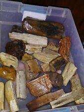 5 Lb Lot Petrified Wood Lapidary Slabbing Cabbing Tumbling Display Rough