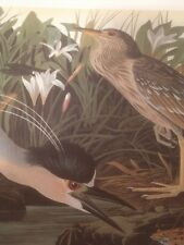 Black Crowned Night Heron. Audubon Bird Print Picture Art