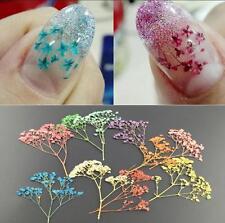 10pcs Mixed Dried Flowers Nail Art DIY Women Girl Decor Flower Manicure Crafts