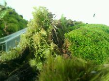 *Vivarium/ Terrarium Moss Frogs Ponds Green House *