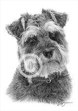 Schnauzer art chien dessin au crayon d'impression A4 seulement signé pet portrait