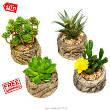 Set of 4 Succulent Plants Potted Mini Floral Coffee Table Decorations Window New