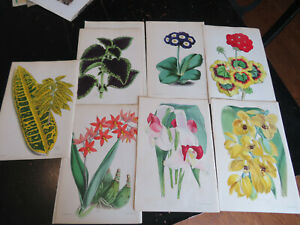 Floral Magazine First Series London ca:1866, 7 plates