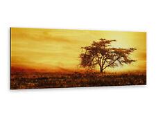 Alu-Dibond Bild ALP12502058 Wildnis Afrika Sonnenuntergang Natur Landschaften 12