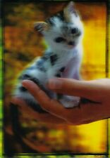 3 -D - Postcard: A Handful of Cats - Baby - Palm Kitten