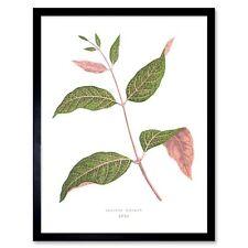 Leaf Echites Nutans 12X16 Inch Framed Art Print