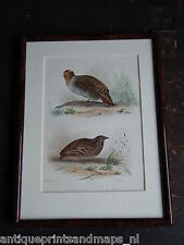 Antique framed bird print Grey partridge Quail 1856 prent vogel patrijs kwartel