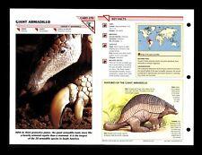 Giant Armadillo Wildlife Fact File Mammal Animal Card Home School Study 1.270