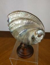 Vtg Mother of Pearl Sea Shell Wooden Stand Iridescent Abalone Dish Sculpture Art