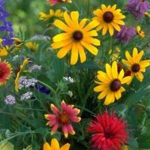 Wildflower Pacific Northwest Mix Seeds (7g+Seeds)