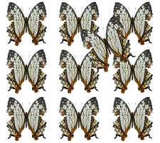 Wholesale Lot of 10 Cyrestis thyodamas Real Map Butterflies Fast From Usa!