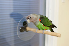 Window Nu Perch for Small to Medium Parrots and Parakeets
