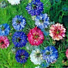 Nigella (love in the mist) Persian Jewel Mix - 2000 seeds - Hardy annual