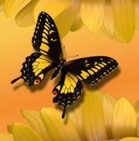 """perfect 30x30 oil painting handpainted on canvas """"butterfly and flowers""""@N4482"""