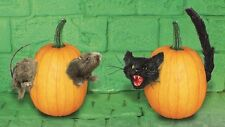 Halloween Citrouille push à rat / cat (1 de asst)