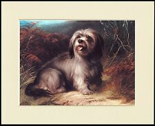 SKYE TERRIER DROP EARED LOVELY LITTLE DOG PRINT MOUNTED READY TO FRAME