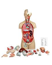 Vision Scientific Vat107-Dc 17 Parts Sexless Human Torso |Open Back W Dust Cover