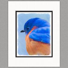 Bluebird WIld Bird Original Art Print 8x10 Matted to 11x14