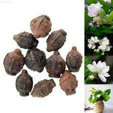 464B 44E4 10pcs Cape Jasmine Jasminiodes White Aromatic Flower Seeds Fresh Plant