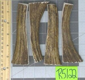 4 Shiras MOOSE DENSE Real Antler Dog Chew For Small Powerful Chewers Lot