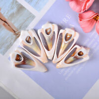 5Pcs natural beautiful top rare real sea shell conch aquar  FN