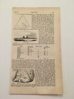 K65) Pyramids of Gizeh Giza Sphinx Egypt Architecture History 1842 Engraving