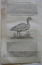 Trappe trappgans Otididae ORIG madera corte 1555 Belon ornitología