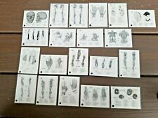 Vintage 1956 Asc Laminated Anatomy Study Cards. 20 - Two Sided Cards Total
