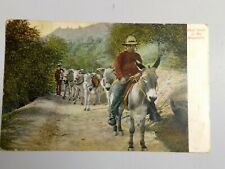 Postcard Pack Train in the Mountains Man on Mule 5 more Mules Early 1900s Newman