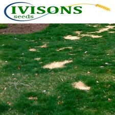 5 Kg Ivisons Fast Growing Rapid Lawn Recovery Grass Seed Quick Repair Pets dogs