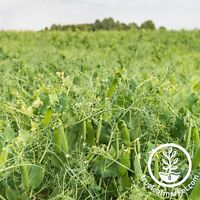 DUNDALE PEA GARDEN COVER CROP - NON-GMO FARM FIELD PEA - GARDENING