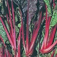 SWISS CHARD SEEDS,SWISS CHARD,RUBY RED, HEIRLOOM, ORGANIC 25+SEEDS, NON GMO