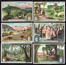 Bird Animal & Plant Life Card Set 1925 Liebig Flamingo Lion Deer Parrot Dog