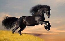 "Black Horse Mini Poster 13""x19"" HD"