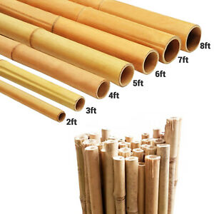 2ft-8ft Large Strong Bamboo Canes Heavy Duty Thick Pole Garden Plants Supported