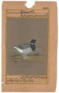 Indien Miniature Aquarelle Peinture Mural Décor Ethnique Art Peint Oiseau