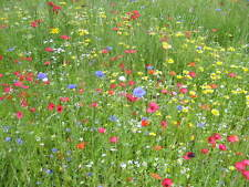 Gazon Japonais mélange fleurs graminée floraison tout l'été 15 grammes pour 15m2