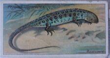 Single: No.35 THE SAND LIZARD - NATURE SERIES John Player & Sons 1909