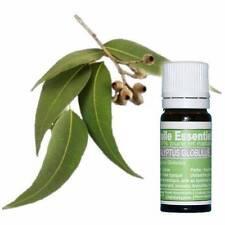 Huile essentielle Eucalyptus Globulus Pure et naturelle 10 ml  Top des huiles