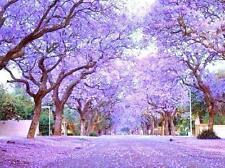 Royal Empress Tree Paulownia Elongata flowering tree wood bonsai seed 10 seeds
