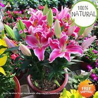 Pink Lily Flower Seeds Plants Potted Bonsai Flores Home Indoor 100pcs/bag