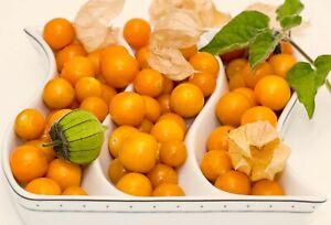 Ground Cherry Seeds ~Physalis Peruviana~ Cape Gooseberry Inca Berry Golden Berry